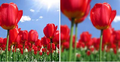 10 trucos para optimizar y posicionar tus imágenes